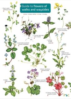 op176-wayside-plants